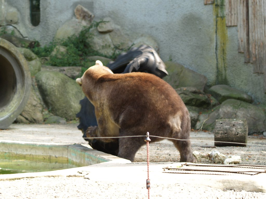 zoo__315_.JPG