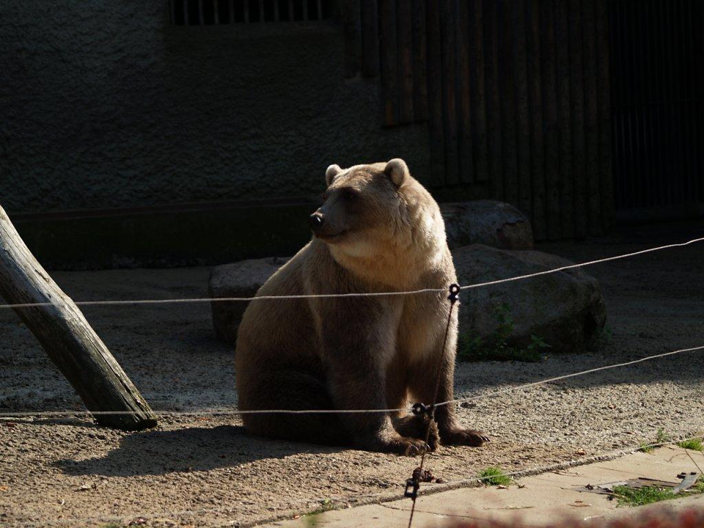 zoo__333_.JPG
