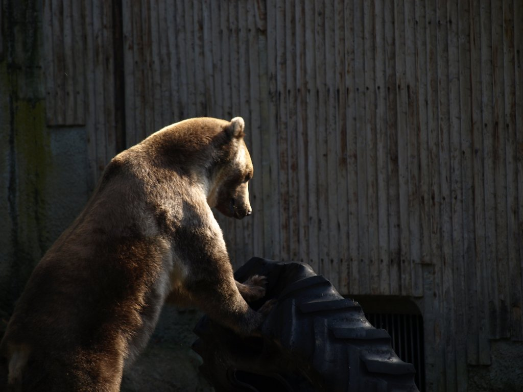 zoo__198_.JPG