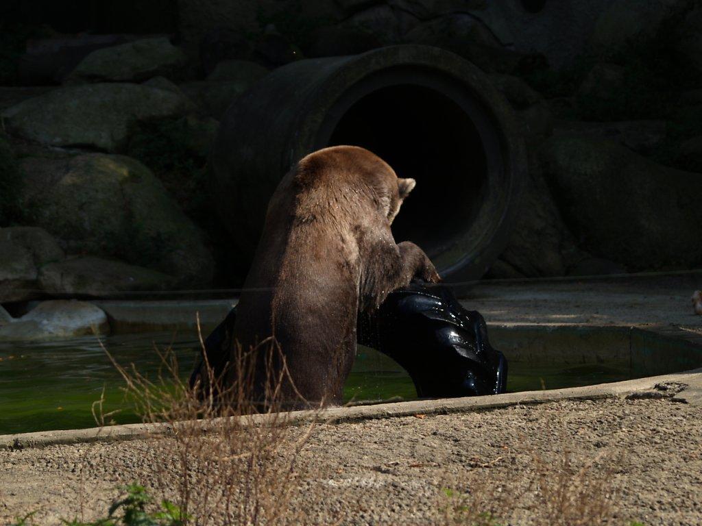 zoo__334_.JPG