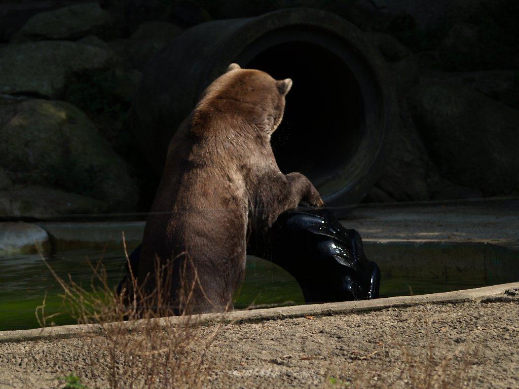 zoo__335_.JPG