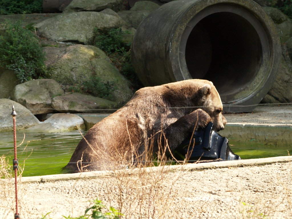 zoo__336_.JPG