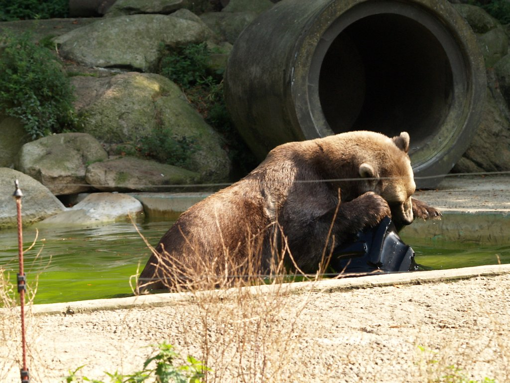 zoo__337_.JPG