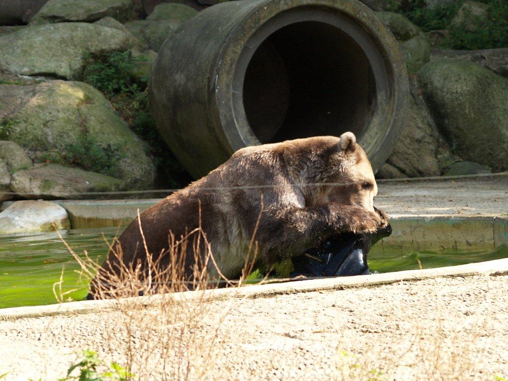 zoo__339_.JPG