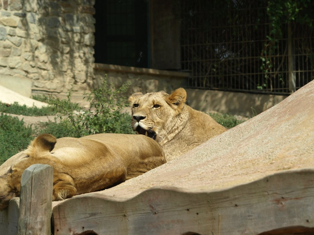 zoo__345_.JPG