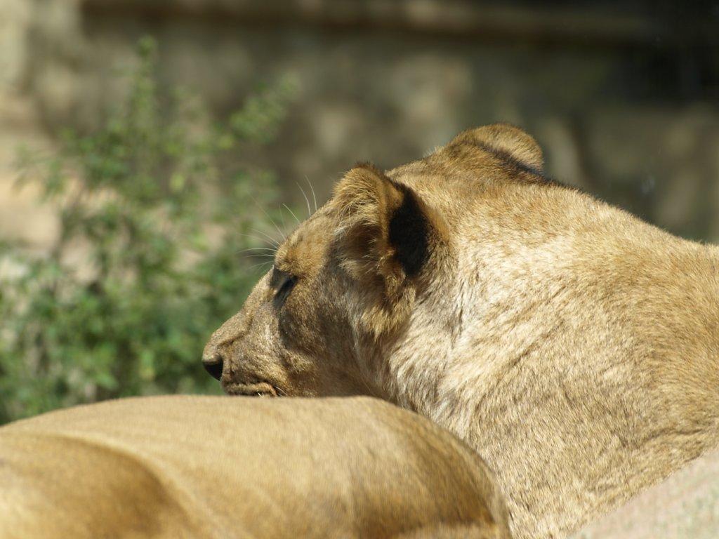 zoo__348_.JPG