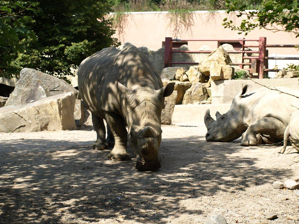 zoo__367_.JPG